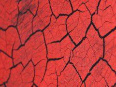 Sp Craquelee Black Red 1