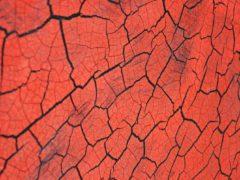 Sp Craquelee Black Red